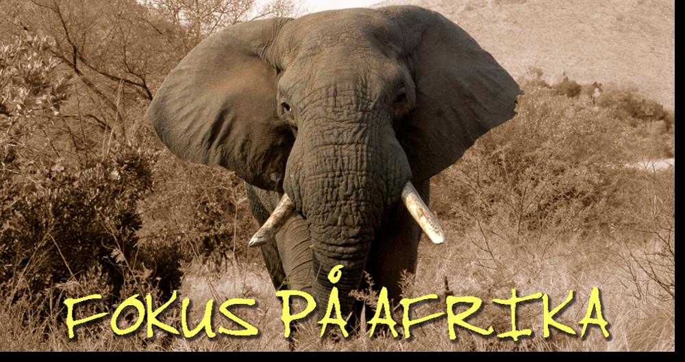 lever krokkodiller og slanger i afrika