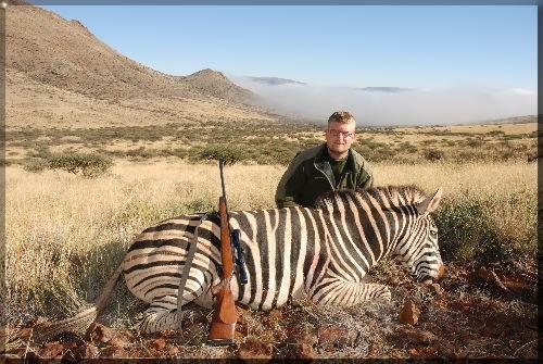 zebraer i flok
